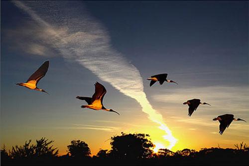 cánh chim và mặt trời