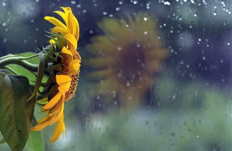 20061103131656_rain53724