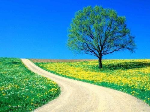 Flowers_-_Spring_Road