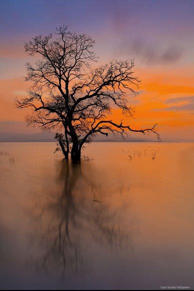 """Tác phẩm """"Cái cây ở hồ thủy điện Sông Hinh"""" – Huỳnh Lê Viễn Duy."""